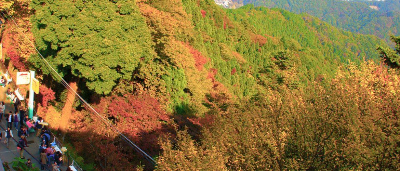 ハイキングには最適!もうすぐ紅葉の季節です。